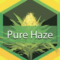 Pure Haze Logo