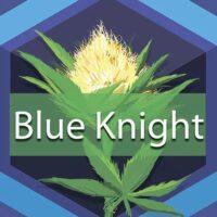 Blue Knight Logo