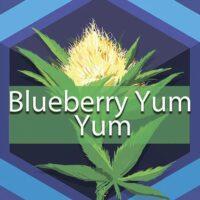 Blueberry Yum Yum Logo