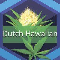 Dutch Hawaiian Logo