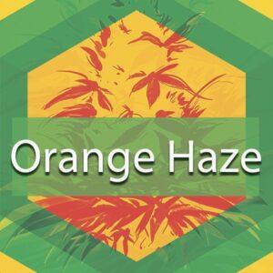 Orange Haze, AskGrowers