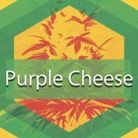 Purple Cheese Logo