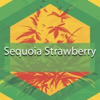 Sequoia Strawberry Logo