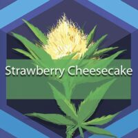 Strawberry Cheesecake Logo