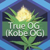 True OG (Kobe OG) Logo