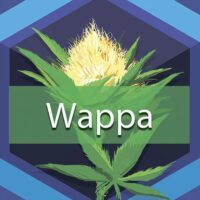 Wappa Logo