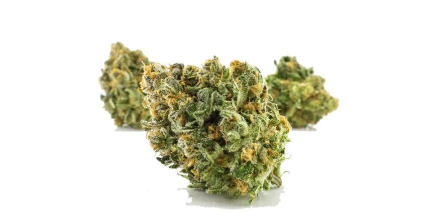 ForwardGro Mimosa cannabis