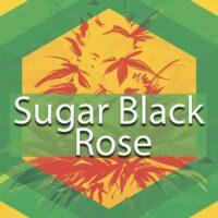 Sugar Black Rose Logo