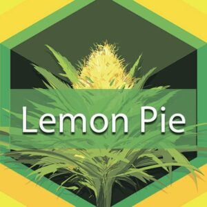 Lemon Pie, AskGrowers