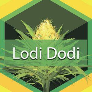 Lodi Dodi, AskGrowers
