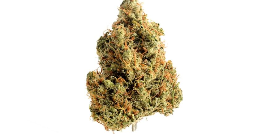 Strawberry Glue weed picture
