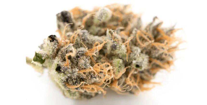 Sweet Tart cannabis