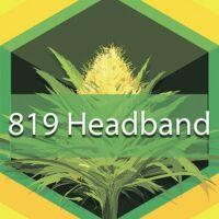 819 Headband Logo