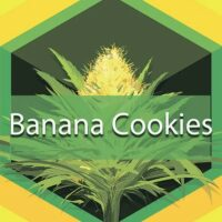 Banana Cookies Logo