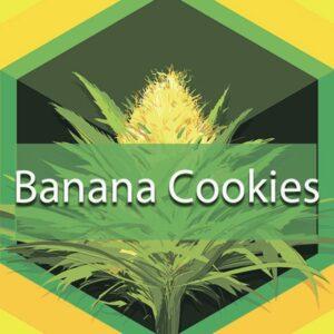 Banana Cookies, AskGrowers