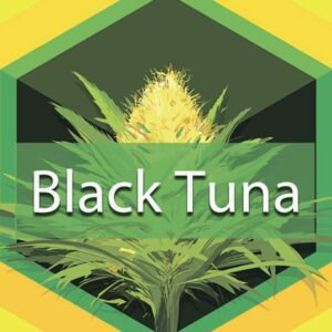 Black Tuna, AskGrowers