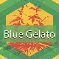 Blue Gelato Logo