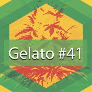 Gelato #41, AskGrowers