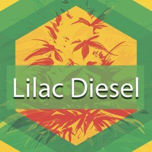 Lilac Diesel, AskGrowers