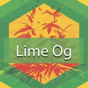 Lime OG, AskGrowers