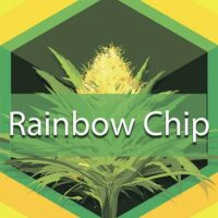 Rainbow Chip Logo