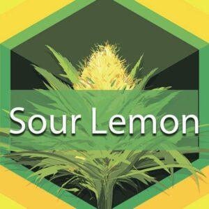 Sour Lemon, AskGrowers