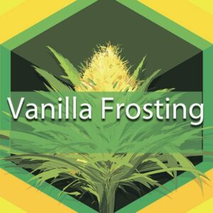 Vanilla Frosting, AskGrowers