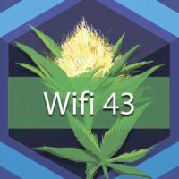 Wifi 43 Logo