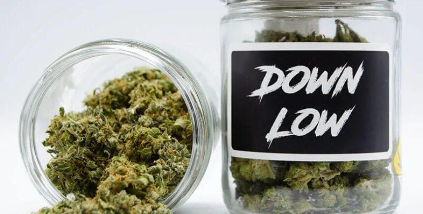 Down Low flower jar