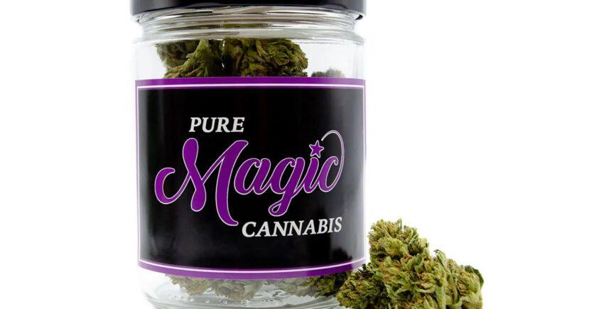 Pure Magic purple