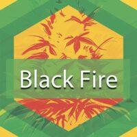 Black Fire Logo