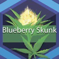 Blueberry Skunk Logo