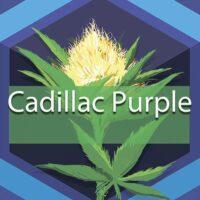 Cadillac Purple Logo