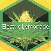 Electric Lemonade Logo