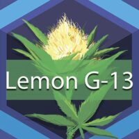 Lemon G-13 Logo
