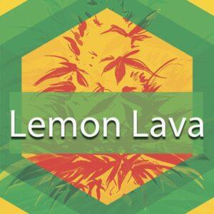 Lemon Lava, AskGrowers