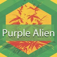 Purple Alien Logo