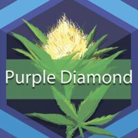 Purple Diamond Logo