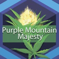 Purple Mountain Majesty Logo
