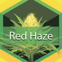 Red Haze Logo