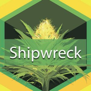 Shipwreck, AskGrowers