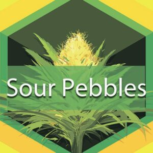 Sour Pebbles, AskGrowers