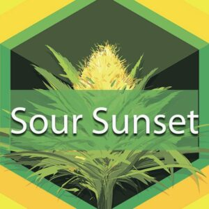 Sour Sunset, AskGrowers