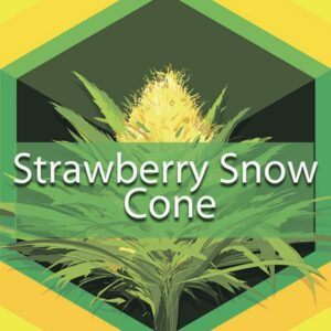 Strawberry Snow Cone, AskGrowers
