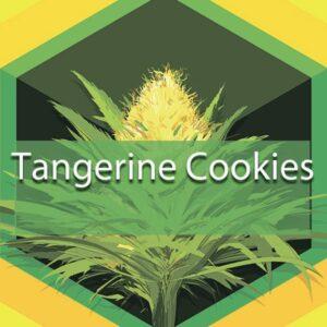 Tangerine Cookies, AskGrowers