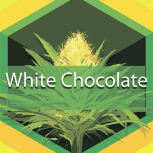 White Chocolate, AskGrowers