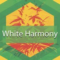 White Harmony Logo