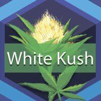 White Kush Logo