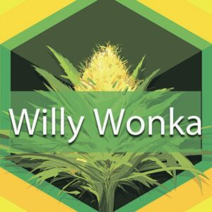 Willy Wonka, AskGrowers