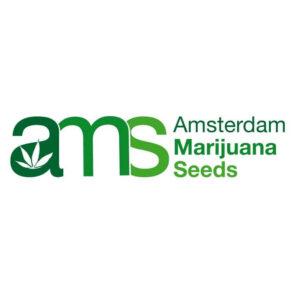 Amsterdam Marijuana Seeds, AskGrowers